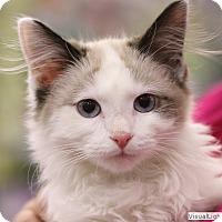 Adopt A Pet :: Sally - Westchester, CA