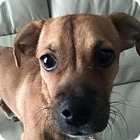 Adopt A Pet :: Wrigley - West Allis, WI