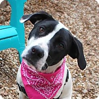 Adopt A Pet :: Penny - Austin, TX