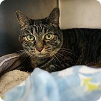 Adopt A Pet :: Angel - Mt Vernon, NY