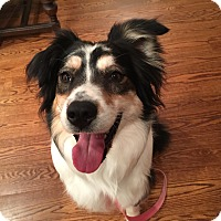 Adopt A Pet :: Lainey COME MEET ME! - Westport, CT
