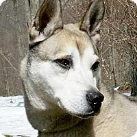 Adopt A Pet :: Playday - Canterbury, CT