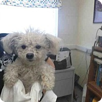 Adopt A Pet :: A085968 - Hanford, CA