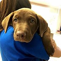 Adopt A Pet :: Georgia - Cumming, GA