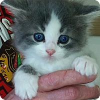 Adopt A Pet :: Josie - Montgomery, IL