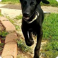 Adopt A Pet :: Isaac - DeForest, WI