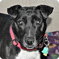 Adopt A Pet :: Dana - Yreka, CA