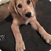 Adopt A Pet :: Emmie-Lou - ST LOUIS, MO