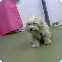 Adopt A Pet :: URGENT 10/25 @ DEVORE - San Bernardino, CA