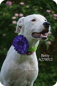Border Collie Mix Dog for adoption in Conroe, Texas - BETTY
