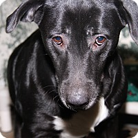 Labrador Retriever Mix Dog for adoption in Marietta, Ohio - Winnie