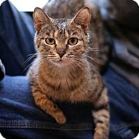 Adopt A Pet :: Tulia - New Prague, MN