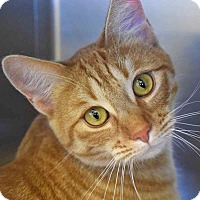 Adopt A Pet :: Tigger - Sierra Vista, AZ