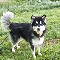 Adopt A Pet :: Maddie - Augusta County, VA