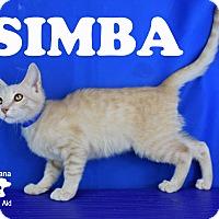 Adopt A Pet :: Simba - Carencro, LA