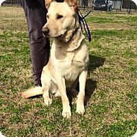 Adopt A Pet :: Poncho - Nashua, NH