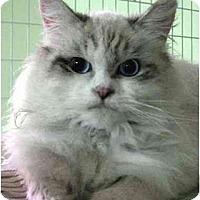 Adopt A Pet :: Shawn - Davis, CA