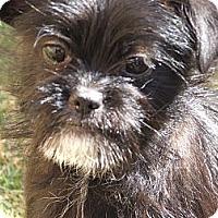Adopt A Pet :: Alexia - San Antonio, TX