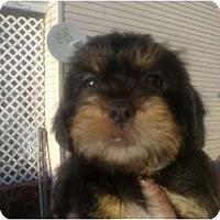 Adopt A Pet :: Liam - Cumberland, MD