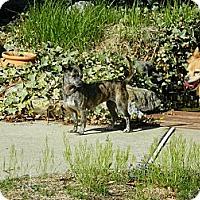 Adopt A Pet :: Chi Chi - West Deptford, NJ