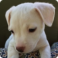 Adopt A Pet :: Lexi - La Costa, CA