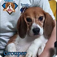 Adopt A Pet :: Grouper - Yardley, PA