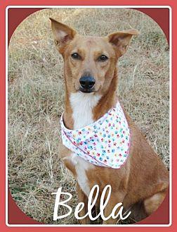Carolina Dog Mix Dog for adoption in Raleigh, North Carolina - Bella