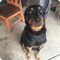Adopt A Pet :: Logan - Gilbert, AZ
