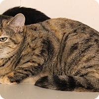 Adopt A Pet :: Gabby - Middletown, CT
