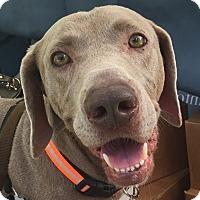 Adopt A Pet :: Wade - Birmingham, AL