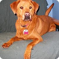 Adopt A Pet :: Rebel - Schaumburg, IL