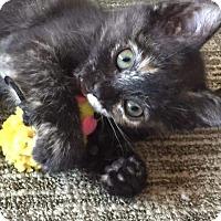 Adopt A Pet :: Jessie - Covington, KY