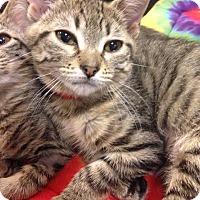 Adopt A Pet :: Jane - Gainesville, FL