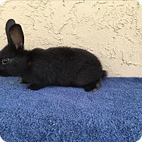 Adopt A Pet :: Chad - Bonita, CA