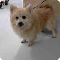 Adopt A Pet :: MAKO - conroe, TX