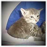 Adopt A Pet :: IVAN - Medford, WI