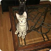 Adopt A Pet :: Grace - Berkeley Hts, NJ