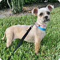 Adopt A Pet :: PENNY - West Palm Beach, FL