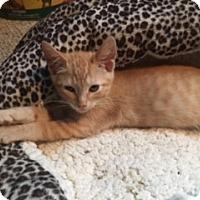 Adopt A Pet :: Cornbread - El Dorado Hills, CA