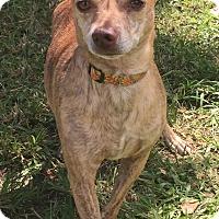 Adopt A Pet :: Houdini - Boca Raton, FL