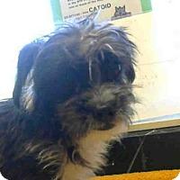 Adopt A Pet :: *DUNCAN - Sacramento, CA
