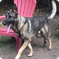 Adopt A Pet :: Reidel - Walnut Creek, CA
