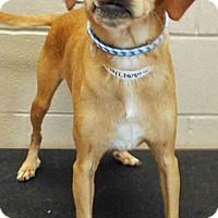 Adopt A Pet :: Dilly - Channahon, IL