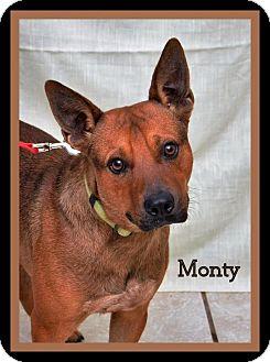 Terrier (Unknown Type, Medium)/Australian Cattle Dog Mix Dog for adoption in DuQuoin, Illinois - Monty