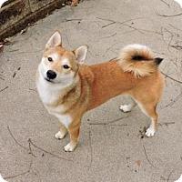 Adopt A Pet :: Christian - Omaha, NE