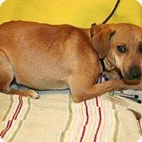 Adopt A Pet :: Louie - Wildomar, CA
