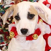Adopt A Pet :: Winter - Glastonbury, CT