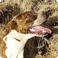 Adopt A Pet :: Perfect Ms Peggy - Albuquerque, NM