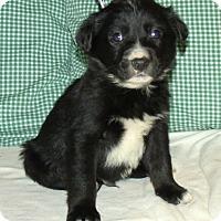 Adopt A Pet :: HERSHAL/ADOPTED - PRINCETON, KY