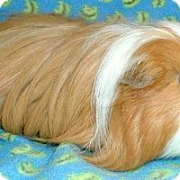 Adopt A Pet :: Wubzy - Steger, IL